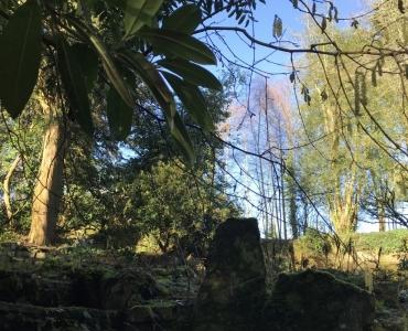 Rock Garden Bamboo